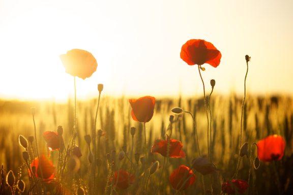 bloom-blossom-field-66274 (1).jpg
